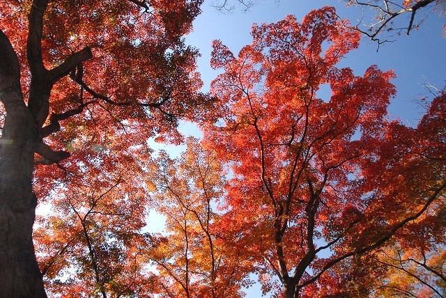 陰陽石と紅葉の裏側7