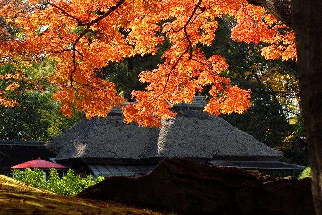 陰陽石と紅葉の裏側8