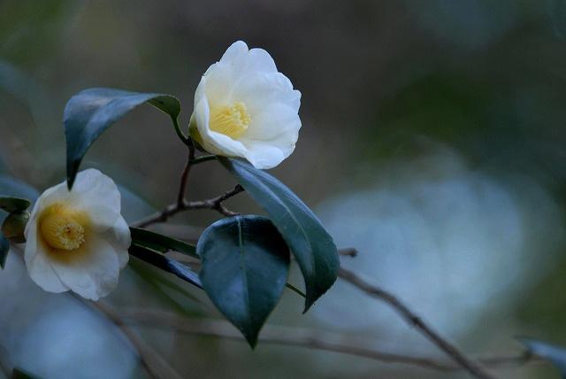 白侘び介2