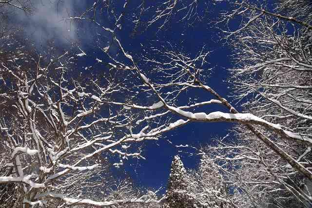 冬の岩井滝6