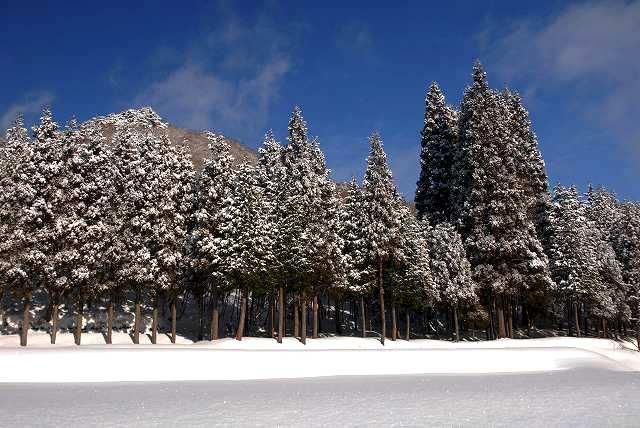 上斎原の雪景色5