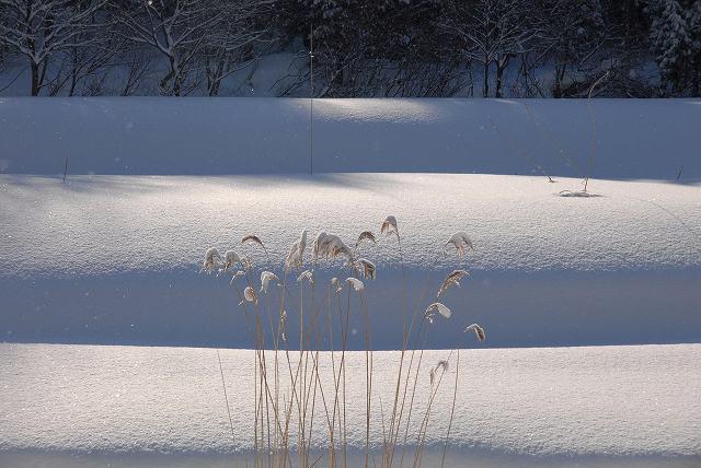 上斎原の雪景色6