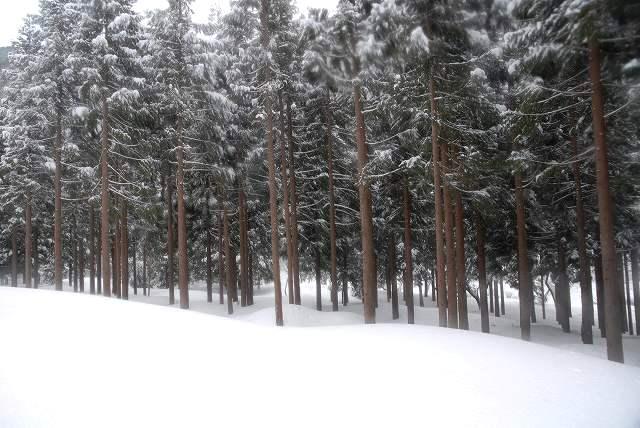 上斎原の雪景色13-2