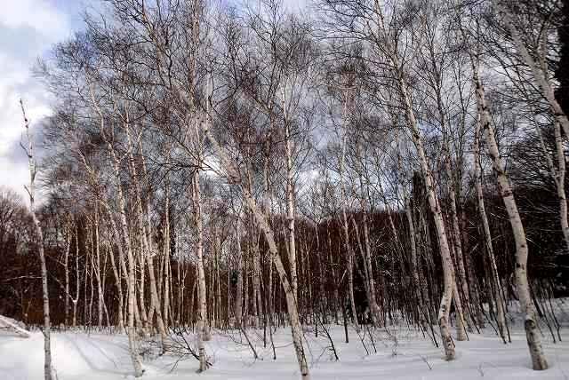 恩原湖の雪景色4
