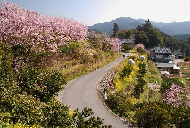 桑田山の雪割桜9