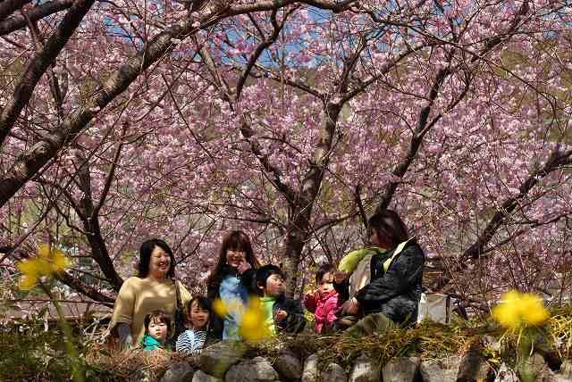 桑田山の雪割桜11