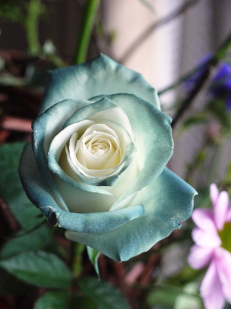 色が変わる花2