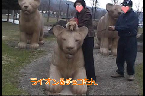 ライオンとチョコ☆