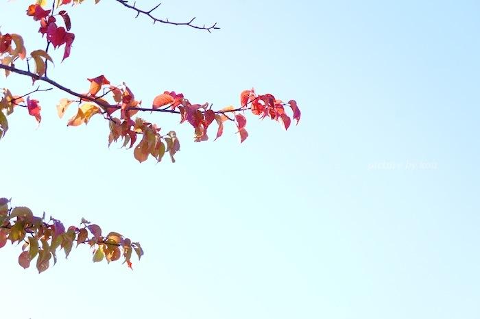 201109asahi-h.jpg
