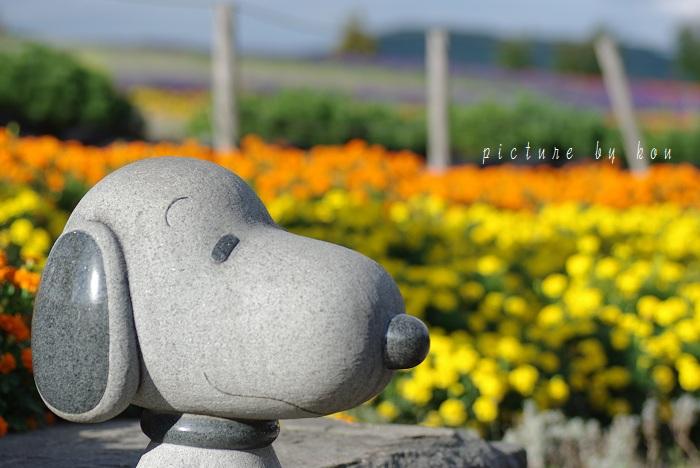 201109zerubunooka3.jpg