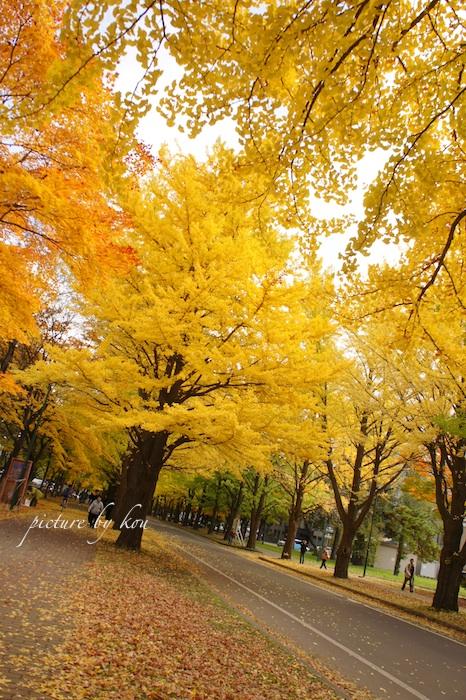 201110icyou4.jpg