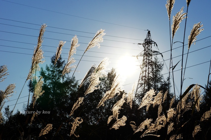 201110susuki.jpg