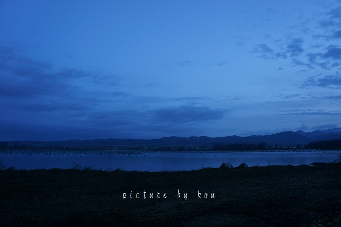 201205miyajima3.jpg