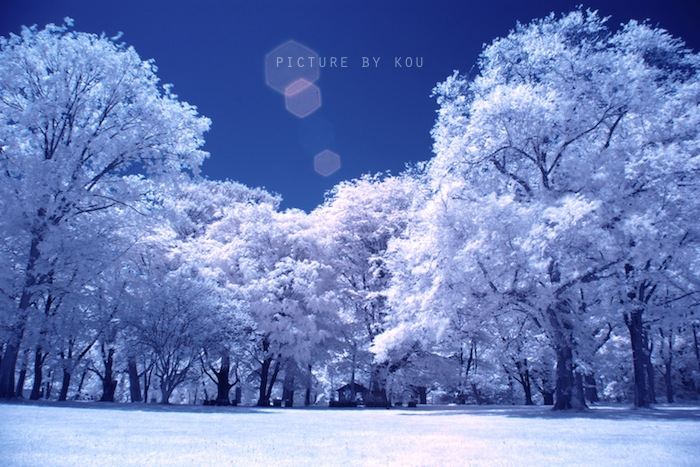 201206syoku-IR.jpg