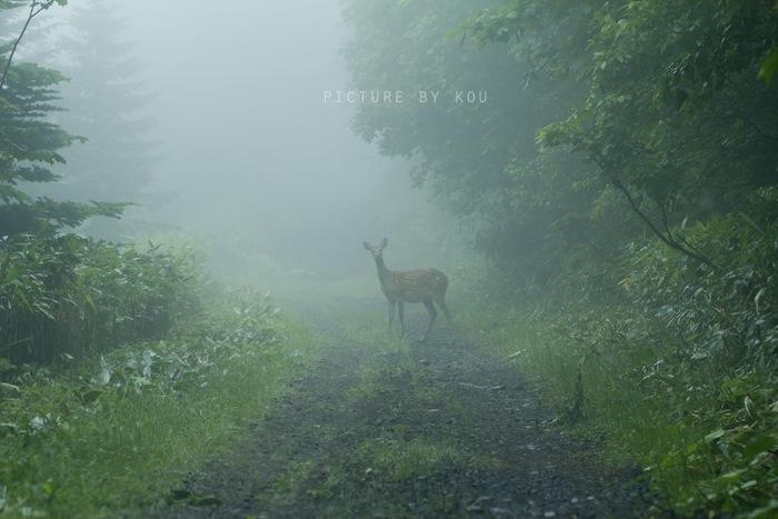 201207eto-sika.jpg
