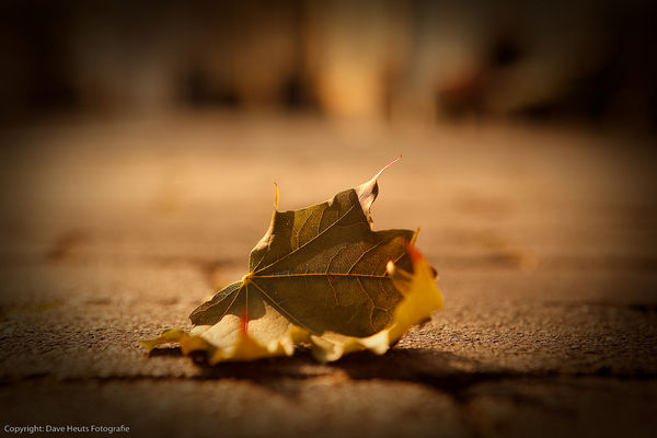 lonely-leaf-left-alone_l.jpg