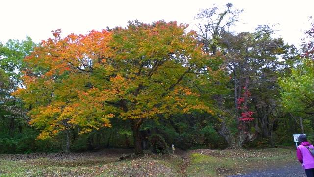 2014-10-16_13-46-13.jpg