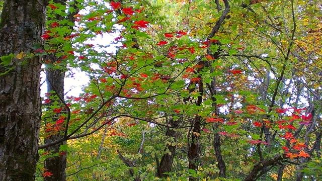 2014-10-16_14-03-46.jpg