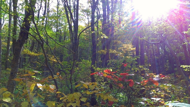2014-10-16_14-09-50.jpg