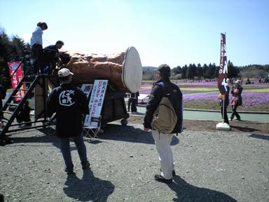 5shibazakura.jpg