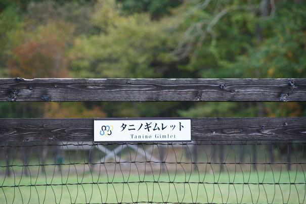 Gimlet20121028_1.jpg