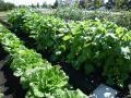 名づけて生駒農園。