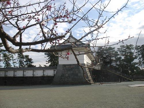 小田原城と梅s