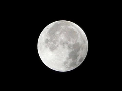 luna P1210756-01