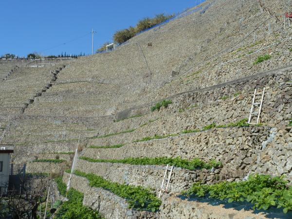 はしごと石段2