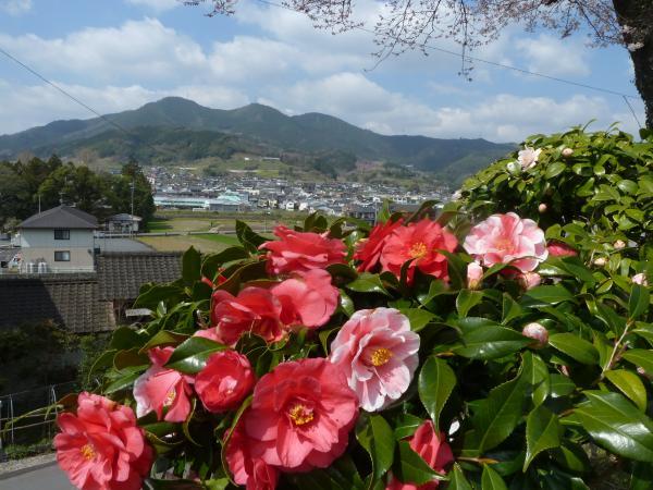 椿と野村4