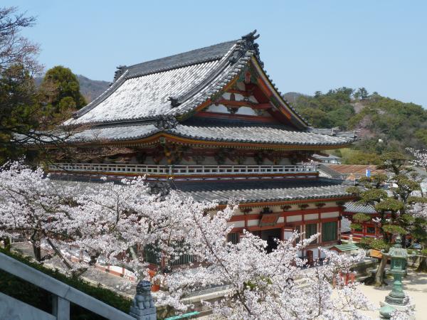 桜と法宝蔵4
