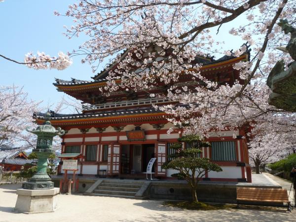 僧宝蔵と桜3