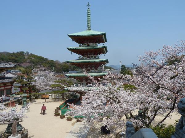 桜五重塔2
