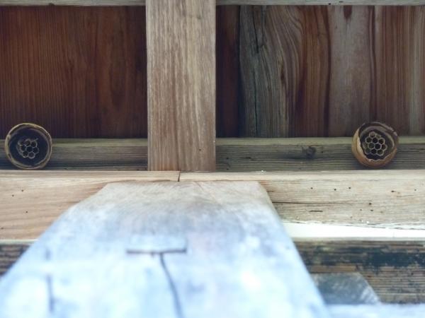 蜂の巣3-7