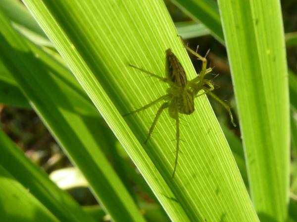 蜘蛛と葉9