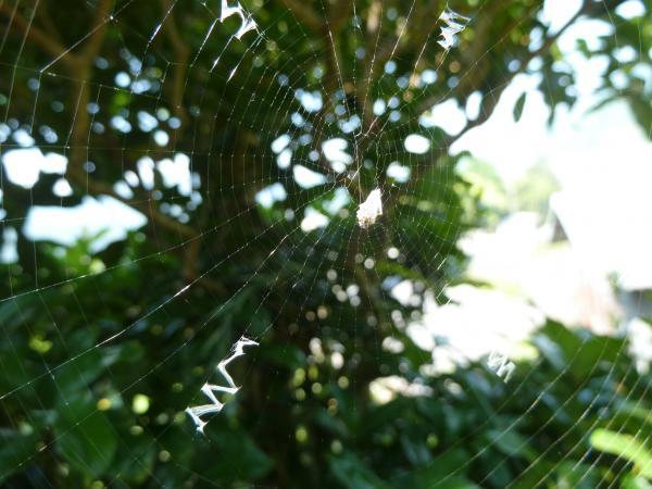 蜘蛛の巣7