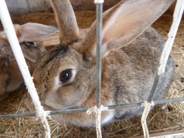 茶色ウサギ10
