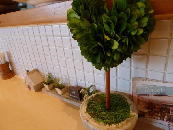 多肉植物9