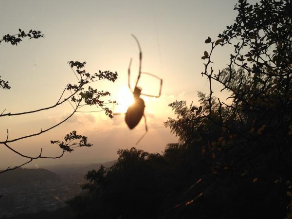 夕日と透けた蜘蛛3