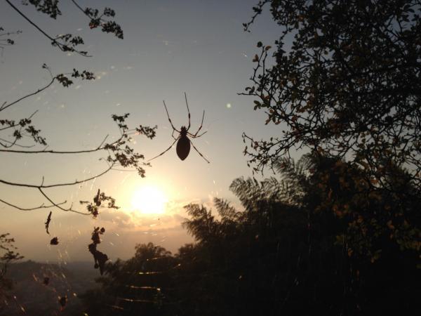 太陽と木々と蜘蛛1