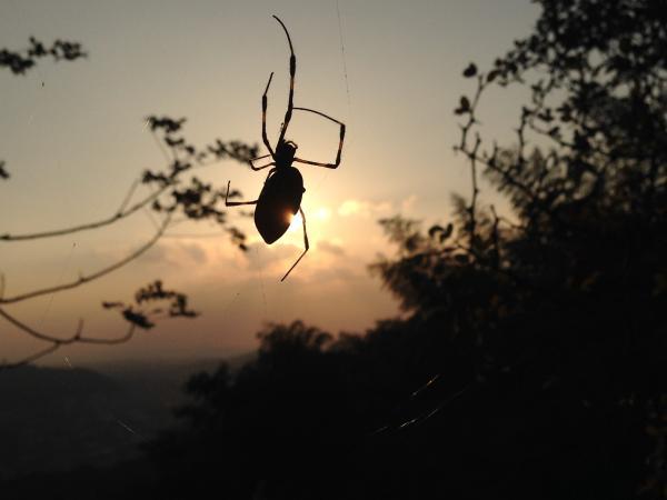 夕日と蜘蛛2