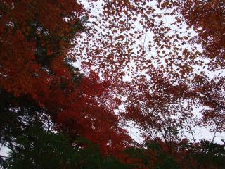 2012_1112広島0043