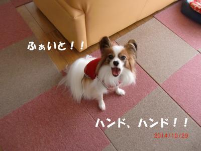 019_convert_20141103160505.jpg