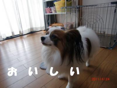 057_convert_20110503221619.jpg
