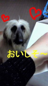 NEC_0424.jpg
