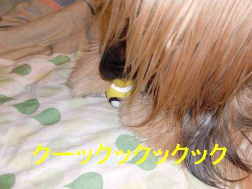 PO20100502_0017_1.jpg
