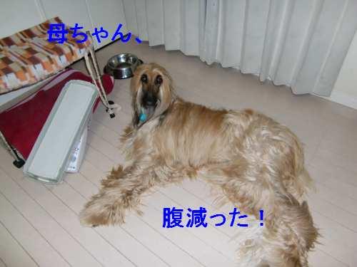 PO20100719_0005.jpg