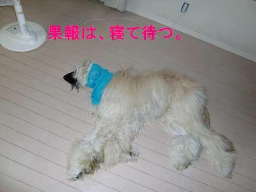 PO20100719_0006.jpg