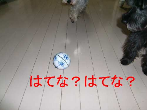 PO20100817_0011.jpg