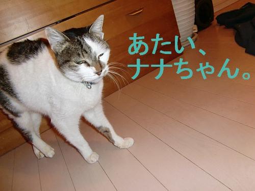 PO20101219_0040.jpg